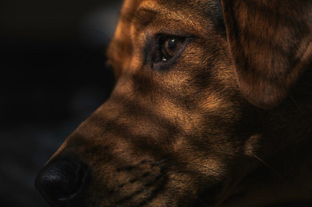 dog-1149188_1920